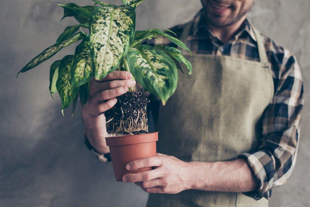 kontrola kořenů rostliny