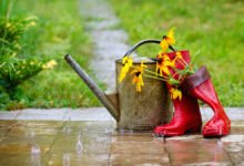 déšť na zahradě