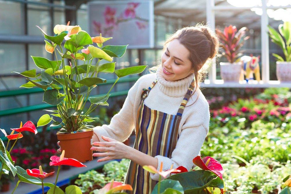 nakupování okrasních rostlin v květinářství