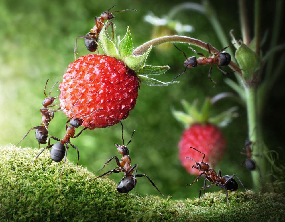mravenci v zahradě