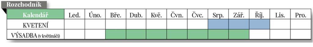 kalendář kvetení a výsadby rozchodníku