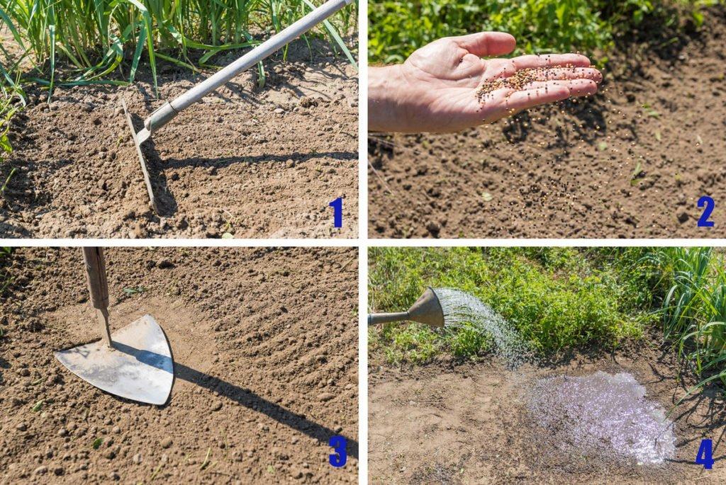 postup vysévání rostlin pro zelené hnojení