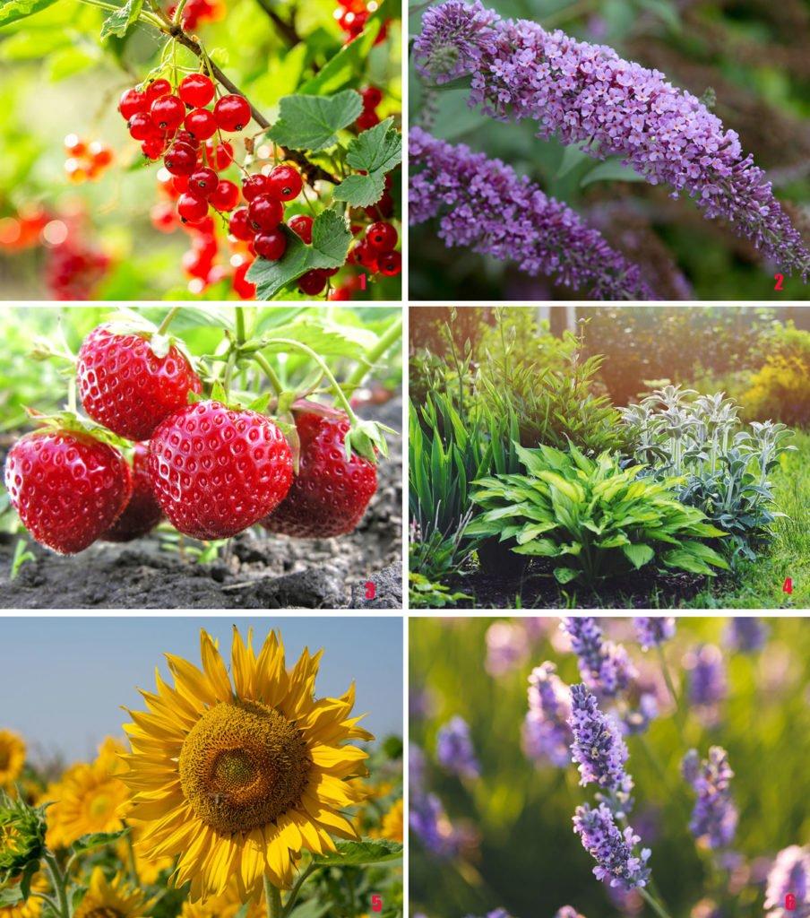 rostliny vhodné do rodinné zahrady