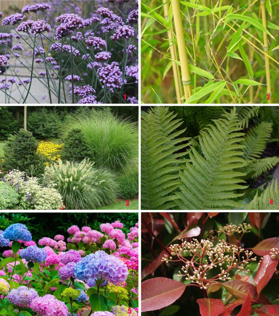 rostliny vhodné pro moderní zahradu