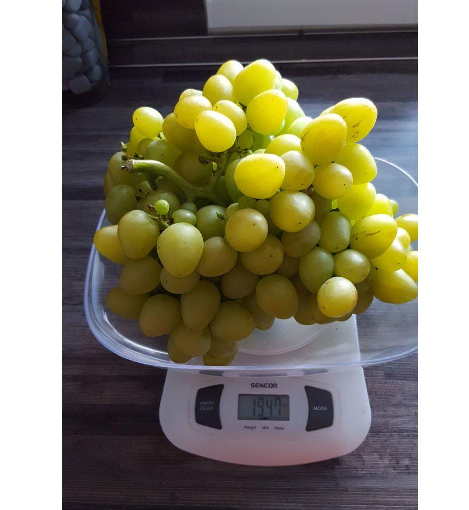odrůda viniče Arkadija