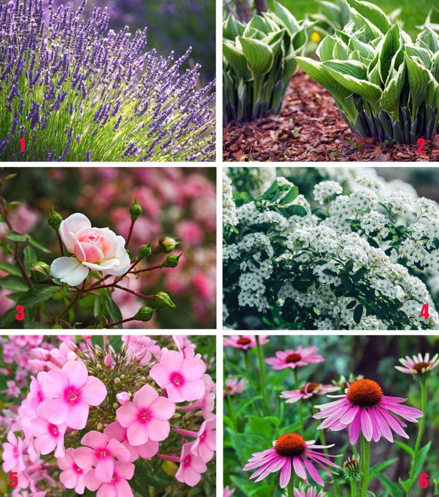 květiny vhodné pro klasickou okrasnou zahradu