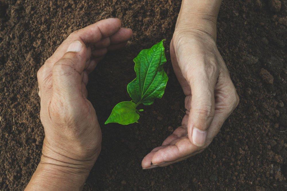 ruce chrání mladou rostlinu vyrastající z půdy