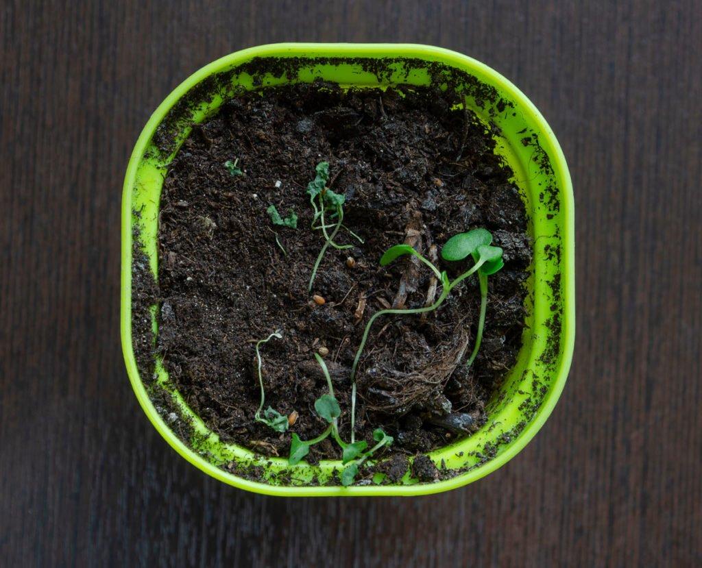 padání klíčních rostlin