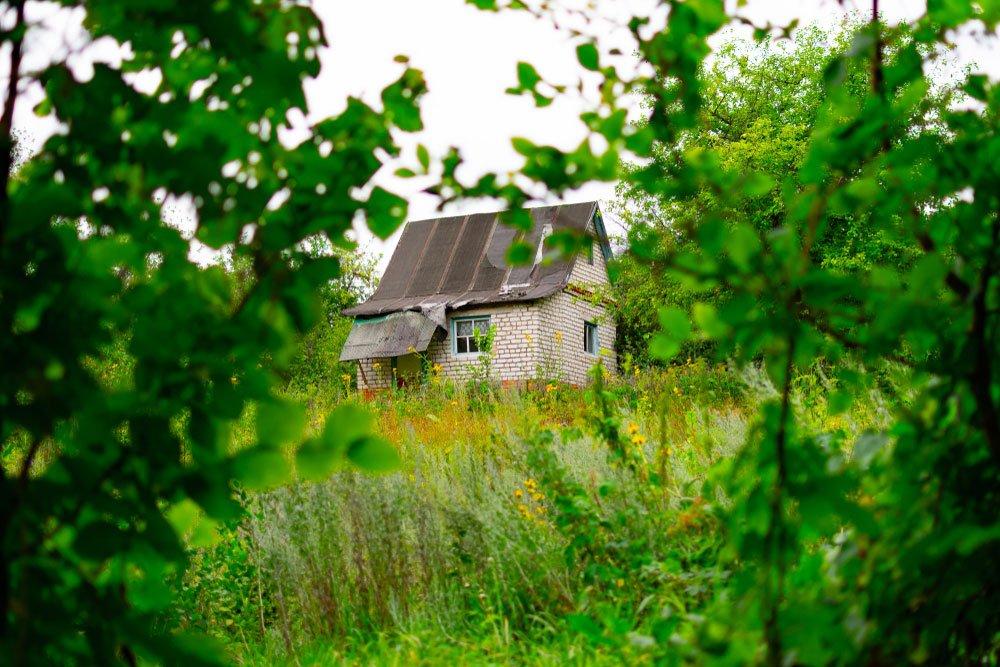 zanedbaná zahrada s plevelem