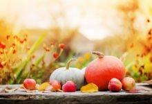 dýně a jablka v zahradě