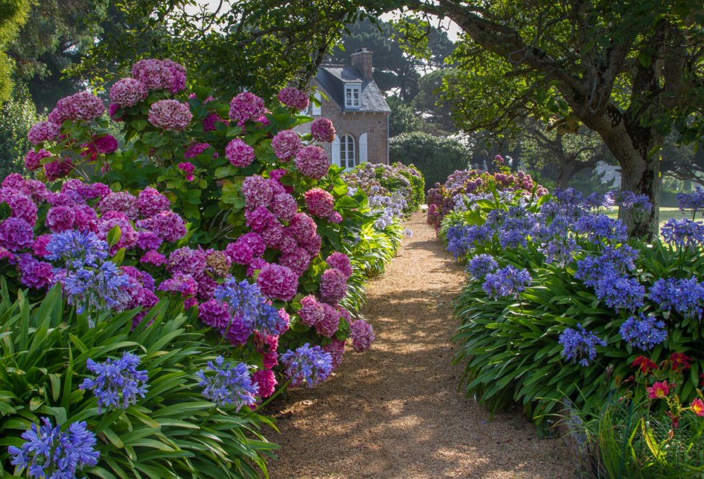 rodinný dům se zahradou s hortenziemi