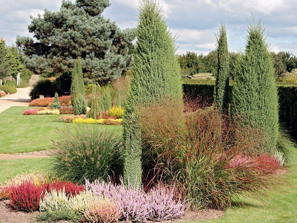 jehličnany v zahradě