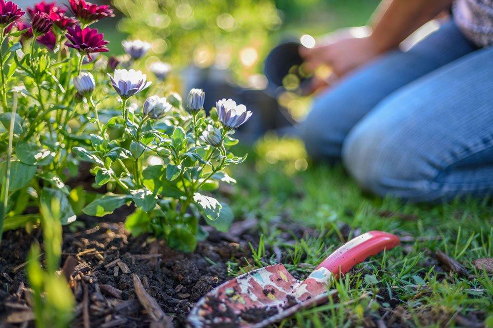 podzimní výsadba trvalek