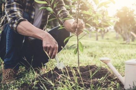 Podzimní průvodce výsadbami: Jak sázet stromy