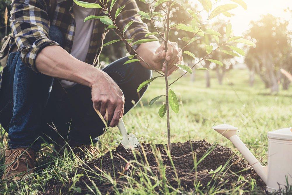 sázení stromu