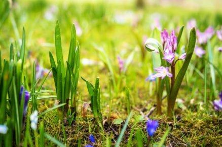 Připravte se na jaro už teď! 6 barevných cibulovin a hlíz, na které se budete po zimě těšit