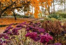 podzimní zahrada s trvalkami