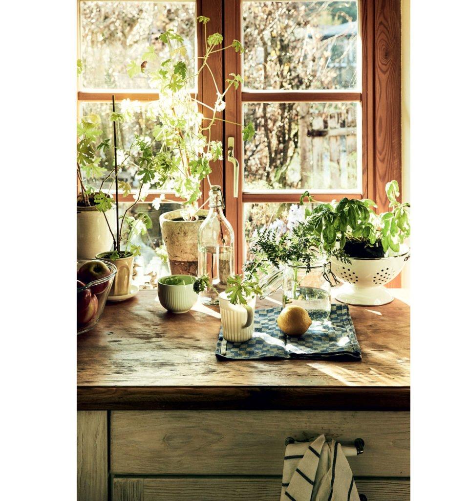 kuchyňské okno s bylinkama ve vázách a pěstěbných nádobách