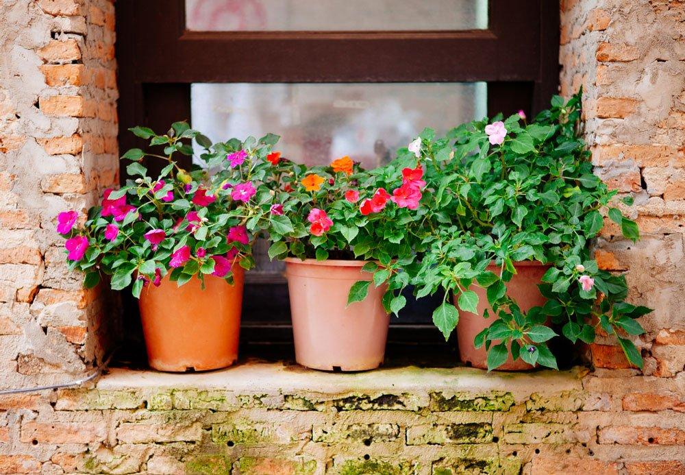 květiny v nádobách na okně