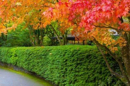 Podzimní průvodce výsadbami: Jak sázet živý plot