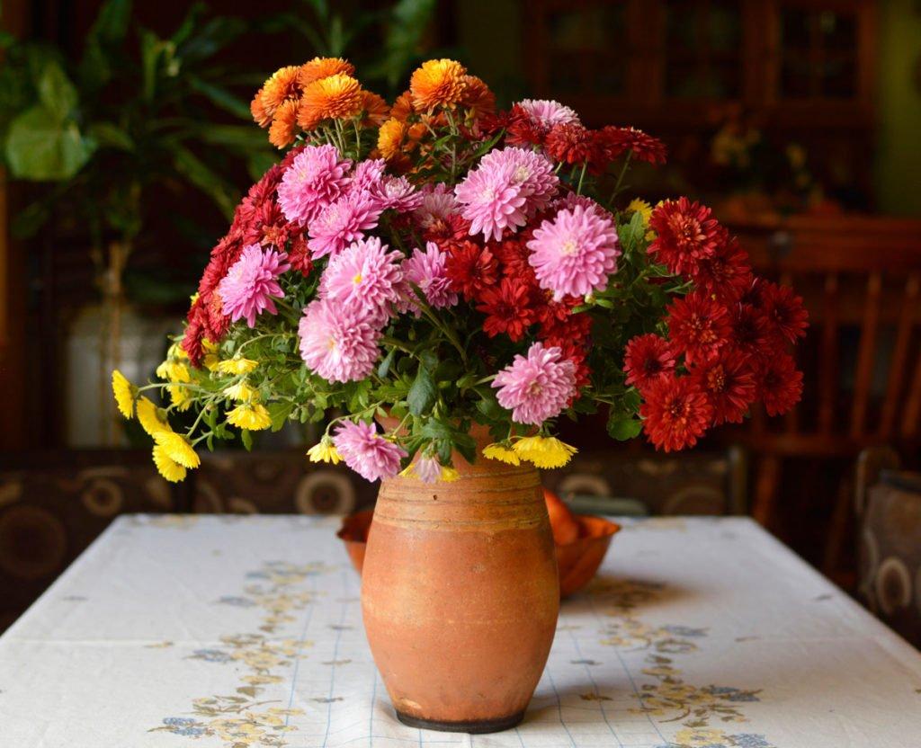 červené, žluté, růžové a oranžové chryzantémy ve váze