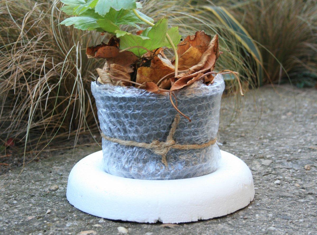 zimní ochrana rostlin polystyrenem a bublinkovou fólii