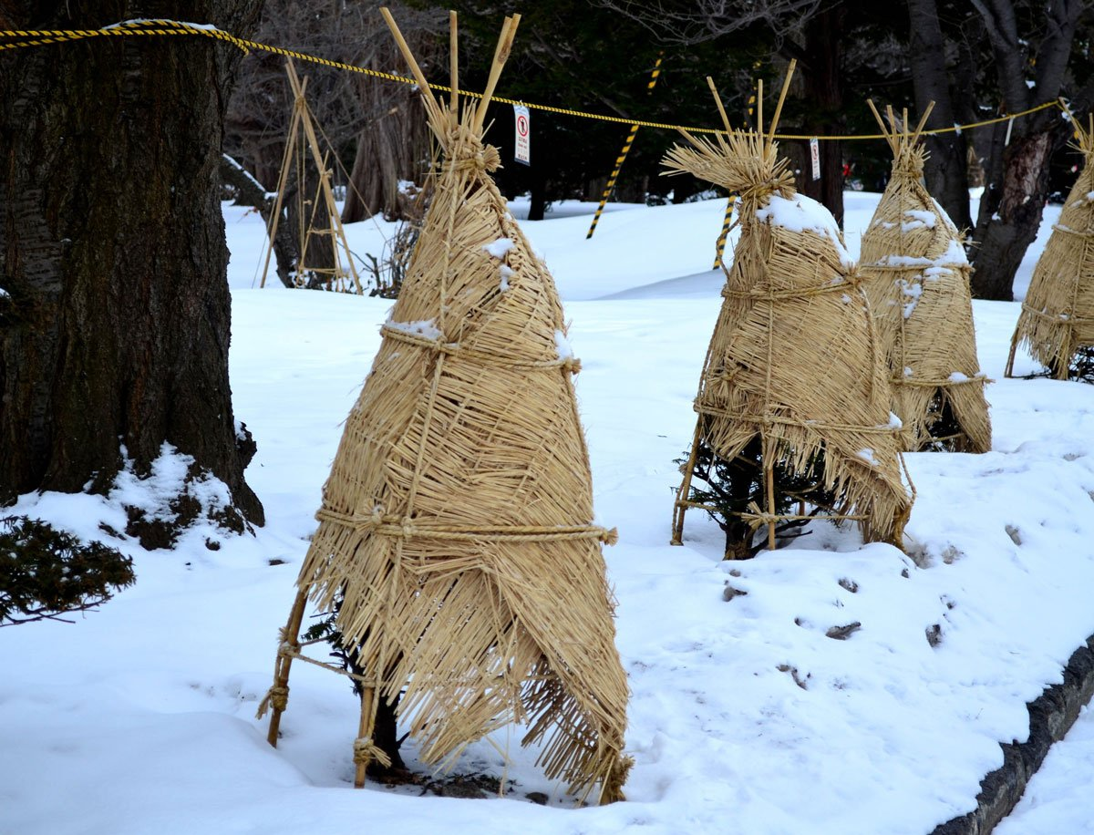 zimní ochrana rostlin třtinovou rohoží