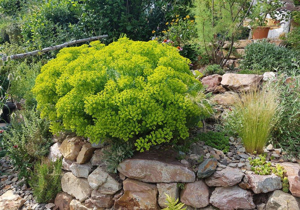 suchá zídka v zahradě