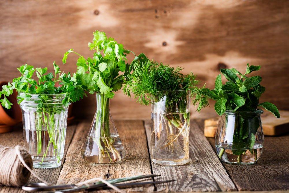 Jak pěstovat bylinky doma či na zahradě: různé druhy bylinek v nádobách s vodou