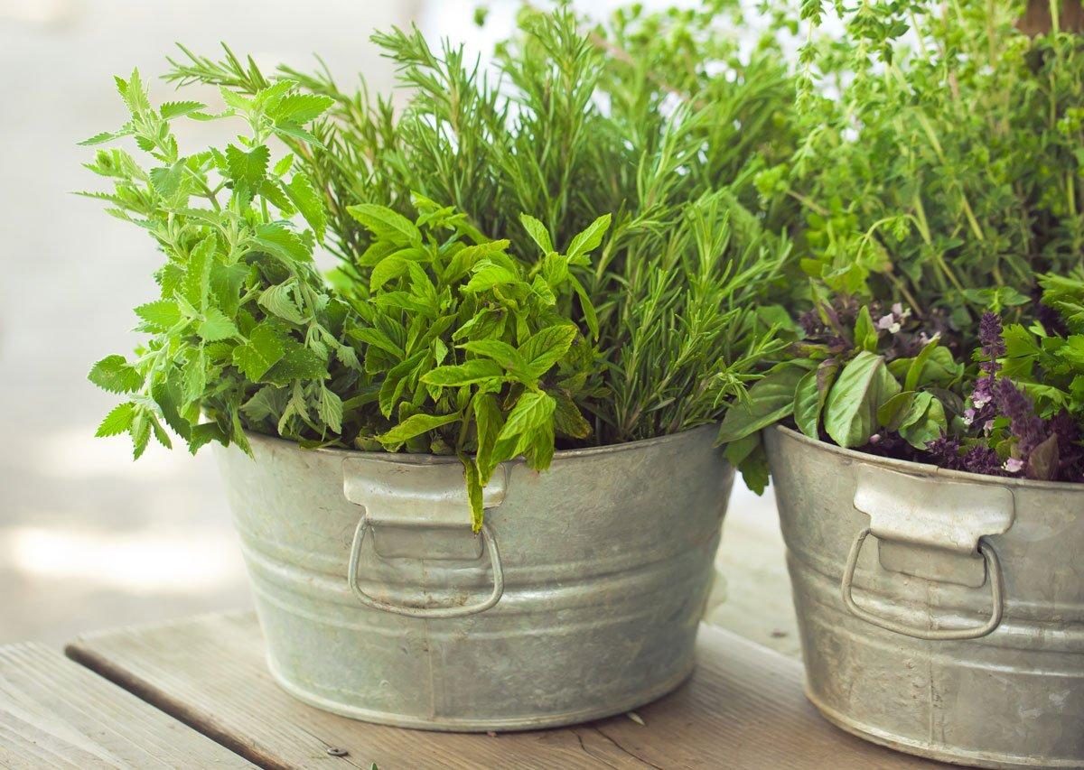 Pěstujeme bylinky doma i na zahradě: směs bylinek v kovových nádobách