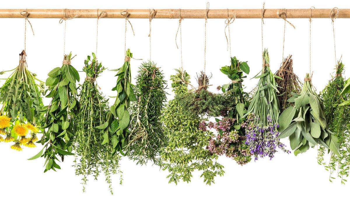 Jak pěstovat bylinky doma či na zahradě: různé druhy bylinek zavěsené o provázek na dřevěné tyči