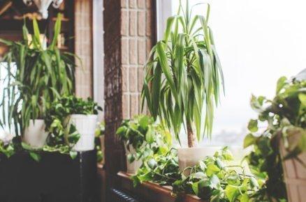 7 pokojovek, které u vás přežijí, i když nejste zrovna pěstitel roka