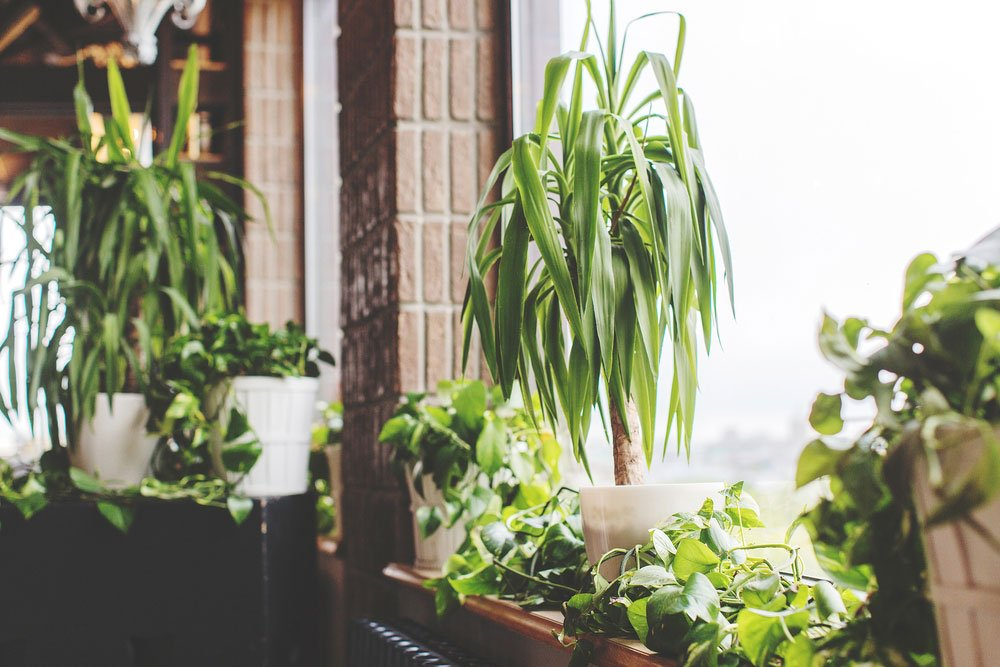 pokojové rostliny nenáročné na pěstování