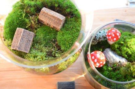 Jaký mech se hodí na dekorace do skleněných nádob a jak o něj pečovat