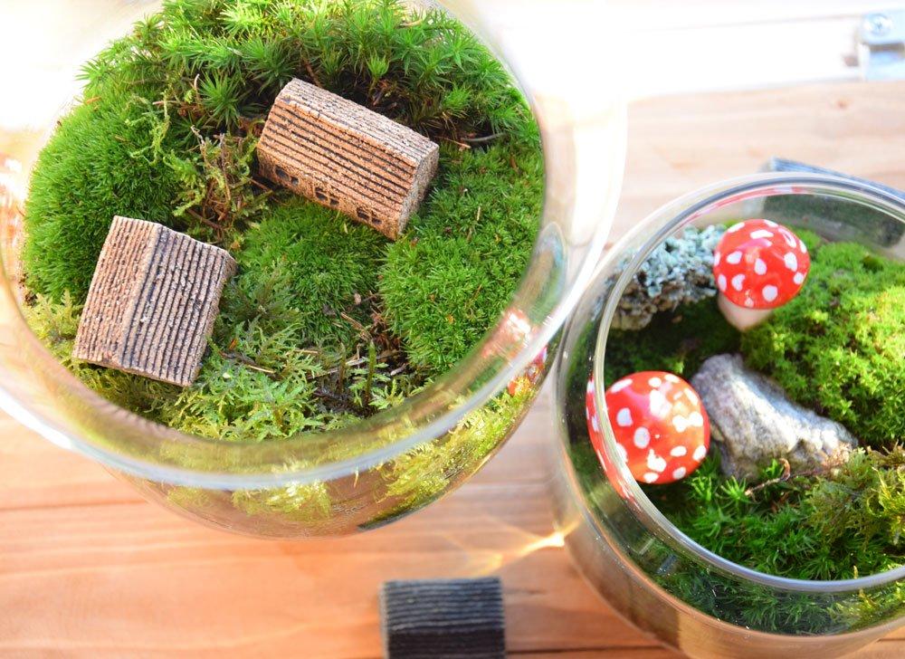 jak pěstovat mech ve skleněných nádobách: mechová dekorace ve skle