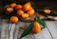 Jak pěstovat kumkvat: plody kumkvatu