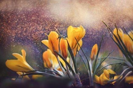 Tyto rostliny udělají z pochmurné zimní zahrady veselou předzvěst jara