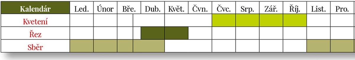 Tabulka kvetení, řezu a sběru kumkvatu