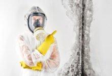 Mýty a fakty o plísních: dezinfekce plísní