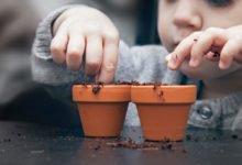 Kdy a jak vysévat květiny: dítě vysévá květiny do kvetináče.