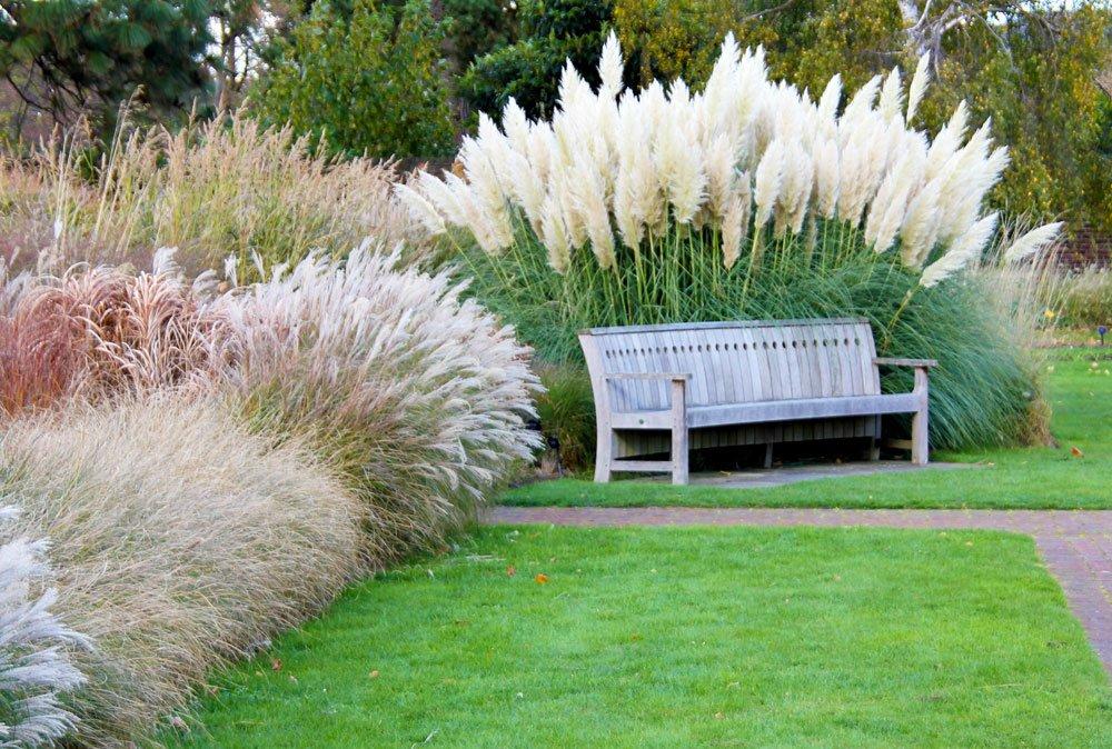 Jarní řez okrasných trav: zahrada s různymi druhy okrasných trav.