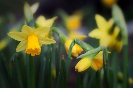Tento symbol jara by neměl chybět ve vašich záhonech