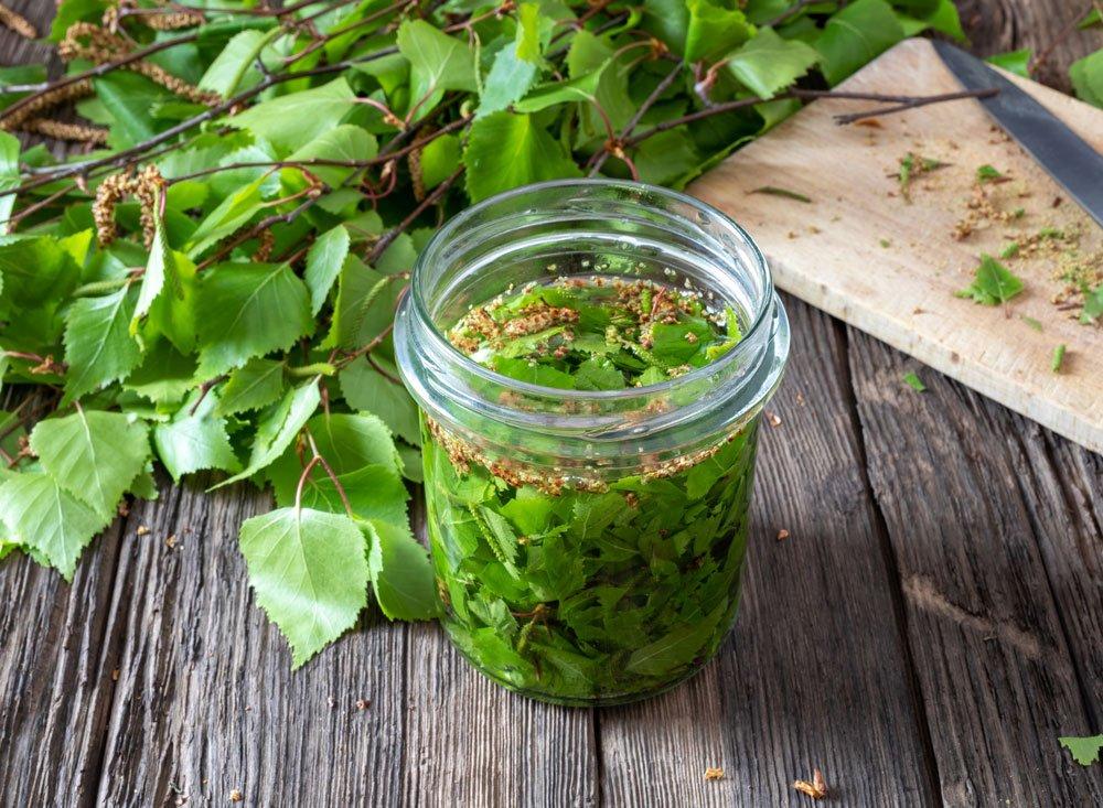 Dubnové léčivé rostliny: bříza naložená na tinkturu.