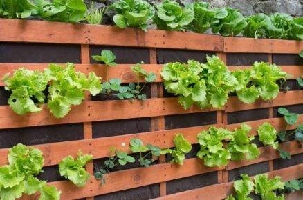 Paletová zeleninová stěna.
