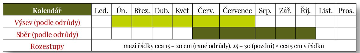 Výsev a sběr mrkve