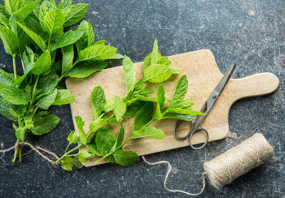Jak pěstovat mátu: máta na dřevěném prkně