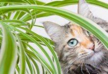 Jedovaté pokojové rostliny pro děti a zvířata