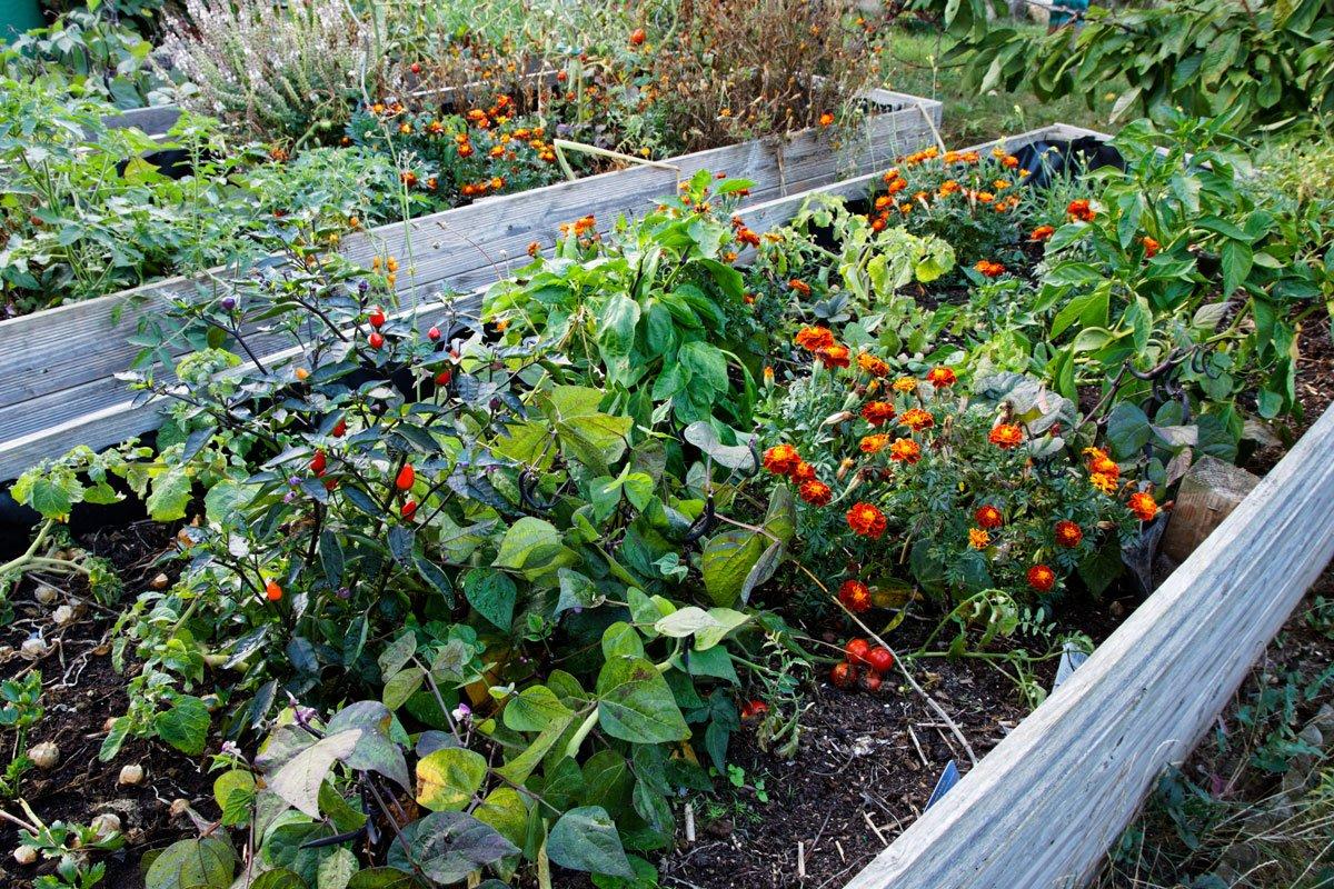 Smíšená výsadba zeleniny a bylinek