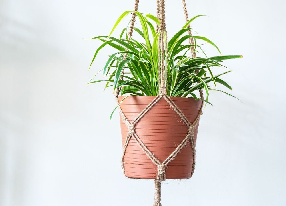jak vyrobit makramé držák na květináč: rostlina v makramé držáku