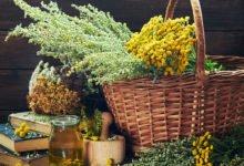 Ekologické výluhy proti mšicím: vratičový výluh